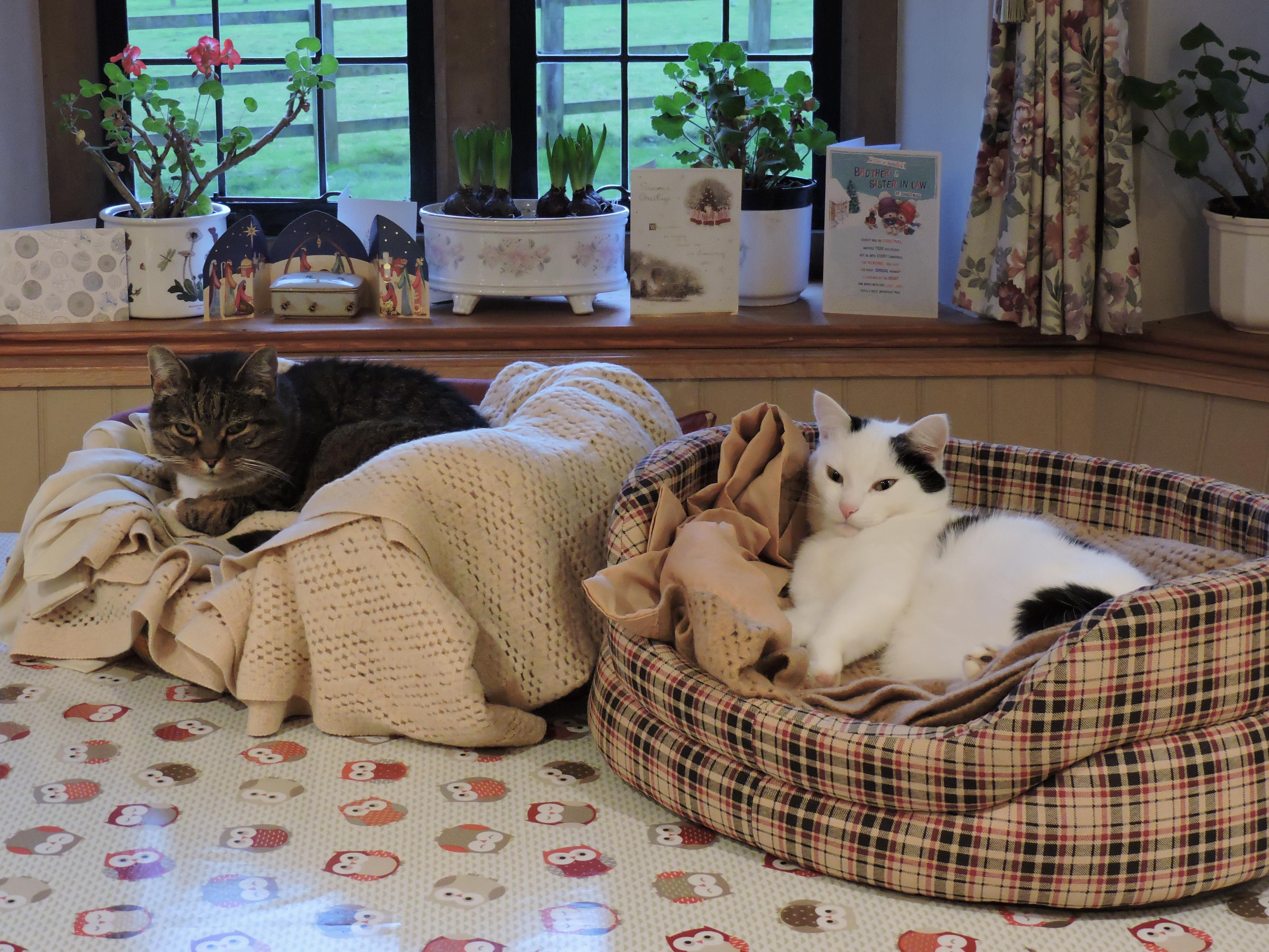 Spoilt cats